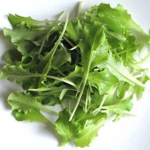 バタビア レタス / レトニー / 有機 種子 固定種 / グリーンフィールド / ベビーリーフ [中袋]