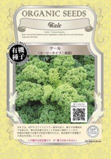 ケール / 緑葉 / 有機 種子 固定種 / グリーンフィールド / ブラシカ [小袋]