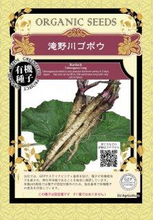 滝野川 ごぼう ゴボウ / 有機 種子 固定種 / グリーンフィールド / 根菜 [小袋]