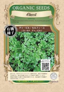 チャービル / セルフィーユ / 有機 種子 固定種 / グリーンフィールド / ハーブ [小袋]