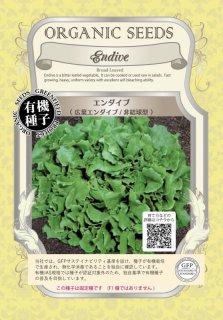 エンダイブ / 広葉 / 非結球型 / 有機 種子 固定種 / グリーンフィールド / 葉菜 [小袋]