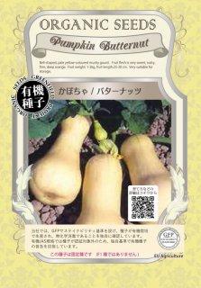 かぼちゃ / バターナッツ / 有機 種子 固定種 / グリーンフィールド / 果菜 [小袋]