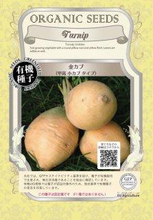 金 カブ / 甲高 小カブ かぶ / 有機 種子 固定種 / グリーンフィールド / 根菜 [大袋]