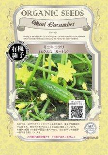 ミニ キュウリ / ピクルス / ガーキン / 有機 種子 固定種 / グリーンフィールド / 果菜 [大袋]