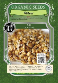 小麦 / 有機 種子 固定種 / グリーンフィールド / スプラウト [中袋]