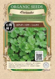 コリアンダー / パクチー / 有機 種子 固定種 / グリーンフィールド / ハーブ [小袋]