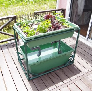 中型 アクアポニックス 水耕栽培 キット オーバーフロー 水槽 / さかな畑 / 家庭菜園 学校 介護施設 向け