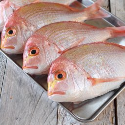 連子鯛(レンコダイ,キダイ)特大:30cm以上