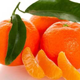 ワイルドオレンジ/WILD orange/Citrus sinensis
