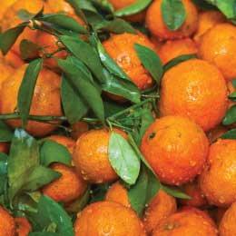 プチグレインクレメンタイン/Petitgrain clementine/Citrus clementina