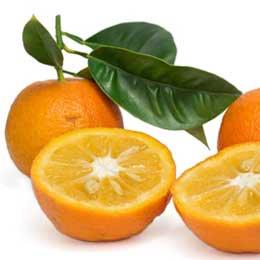 ビターオレンジレッド/Bigarade rouge/Citrus aurantium L.ssp.amara var.pumilia