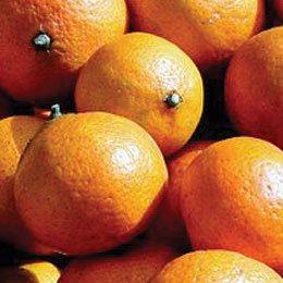 蒸留スイートオレンジ(ブラジル)/Sweet orange/Citrus sinensis
