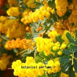 ワイルドミモザCO2/Wild Mimosa CO2/Acacia Mearnsii