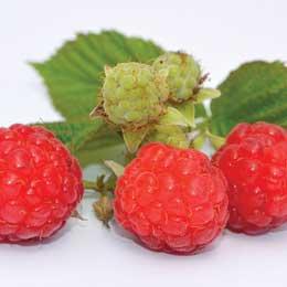 フランボワーズ・ラズベリー種子油/Raspberry seeds/Rubus idaeus