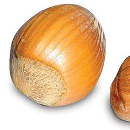 ヘーゼルナッツBIO/Hazel nuts BIO/Corylus avellana