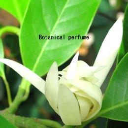 白チャンパカ/Champaca Hydrosol White/Michelia alba