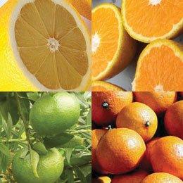 AOF柑橘パーティー