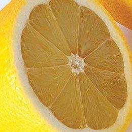 レモンアコード