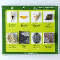 化石標本 8種