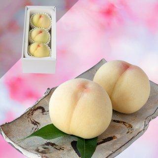 【超特級】清水白桃 3玉