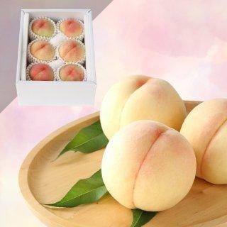 限定50箱【特級】恵白 6玉 約1.5キロ