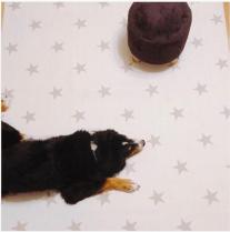 【予約販売・11月上旬入荷】ディパン ペット専用プレイマット ラグマットタイプ スターホワイト