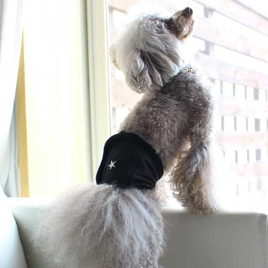 モデル犬:ポンム