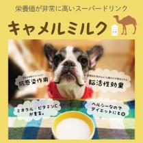 【期間限定セール】キャメルミルク キャメリシャス/パシュートオブラブ