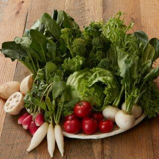 つくば春の野菜ぎっしりセット
