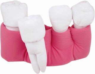 歯根モデル 大