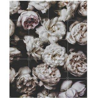 Peony Roses / IXXI ウォールピクチャー