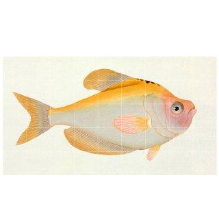 Yellow Fish / IXXI ウォールピクチャー