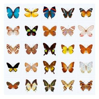 Butterflies / IXXI ウォールピクチャー