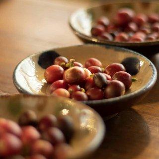 【12/8(日)】希少な国産コーヒーの精製&焙煎体験ワークショップ