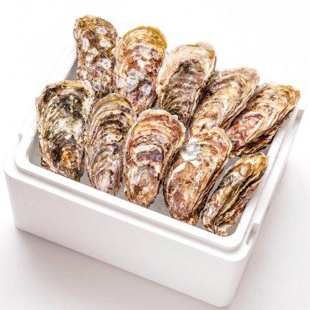 殻付きカキ(特大粒サイズ10個)[加熱用]