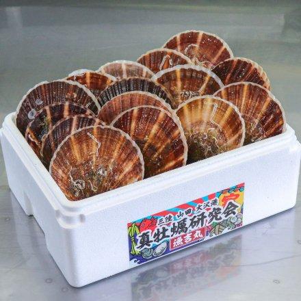 【送料無料】真牡蠣研究会のホタテ(15枚)
