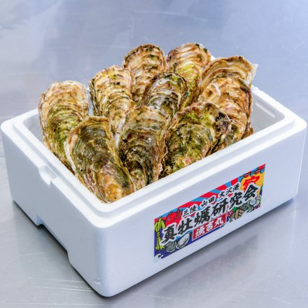 【送料無料】真牡蠣研究会の殻付きカキ3年物(10個)[加熱用]