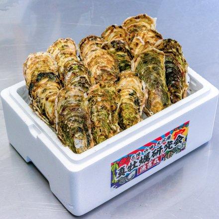 【送料無料】真牡蠣研究会の殻付かき3年物(15個)[加熱用]