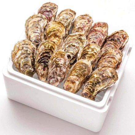 井筒力男さんの殻付きカキ(大粒サイズ15個)[加熱用]