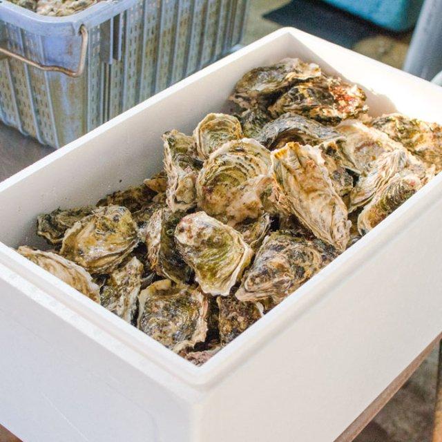 中村敏彦さんのカキロープ4m1本分丸ごとBOX[加熱用]【送料込】