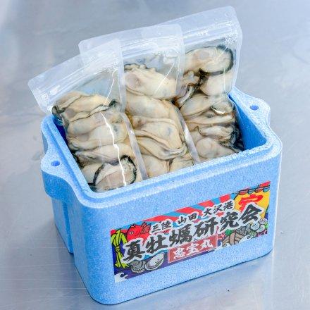 【送料無料】真牡蠣研究会のむきカキ(300g×3個)[加熱用]