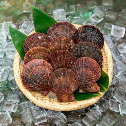 【送料無料】白野さんのアカザラ貝(1.5kg)[加熱用]