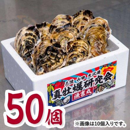 真牡蠣研究会の1年物プレミアムオイスター(50個)[加熱用] ★今だけの特別価格★おうちでオイスターバー【送料込】