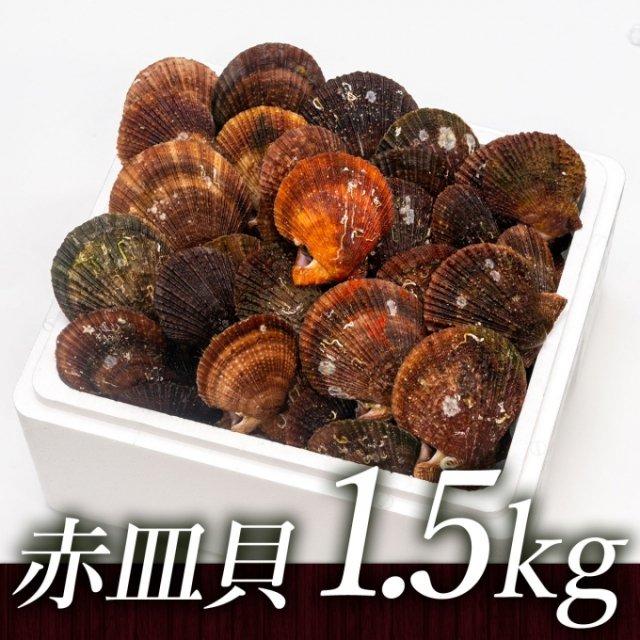 中村敏彦さんのアカザラ貝(1.5kg)[加熱用]【送料込】