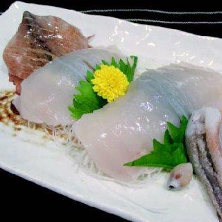 日本海いか小僧姿造り10尾