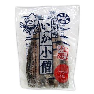 日本海いか小僧5尾