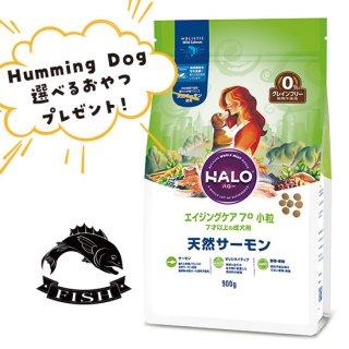 選べるおやつ付き【HALO ハロー・犬用】エイジングケア7+ 小粒 天然サーモン【900g】