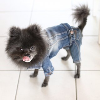<img class='new_mark_img1' src='https://img.shop-pro.jp/img/new/icons14.gif' style='border:none;display:inline;margin:0px;padding:0px;width:auto;' />denim pants