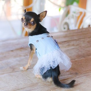 <img class='new_mark_img1' src='https://img.shop-pro.jp/img/new/icons11.gif' style='border:none;display:inline;margin:0px;padding:0px;width:auto;' />Studded Couture<br>【Louis dog】