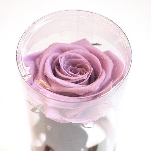 ステムローズ(紫)